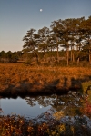 Chincoteague-5