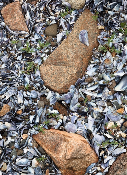 """Mussel Beach"""