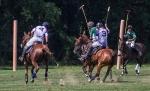 horseblog-11