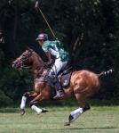 horseblog-13