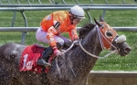 horseblog-16