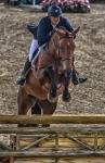 horseblog-2