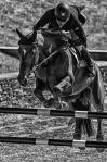 horseblog-5