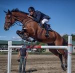 horseblog-6