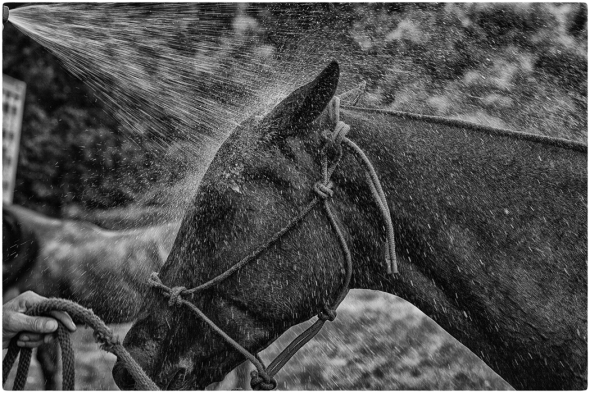 """the domesticated horse essay As a blurred line between the concepts of domestic and wild midnight sand"""" horse essay about why i am a rather domestic horse that retains."""