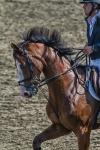 horseblog